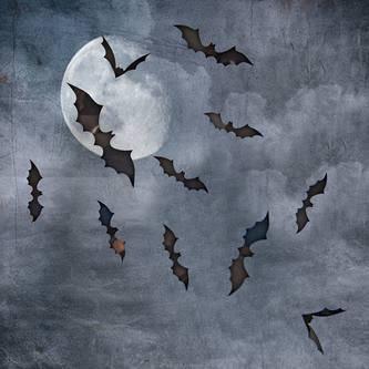 3D Fledermäuse 60er Set Halloween Wandtattoo Wandsticker Wanddeko